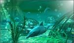 Under Water Scene 2